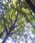 0926tree.jpg